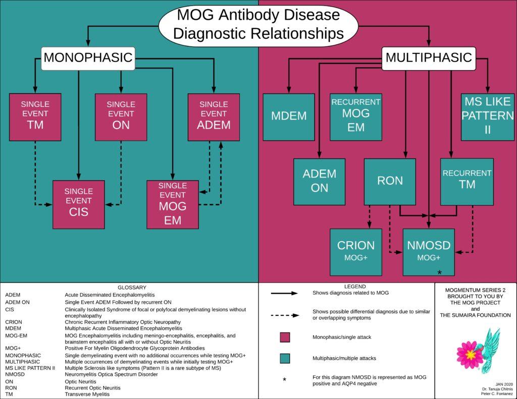 MOG relationship map (3)