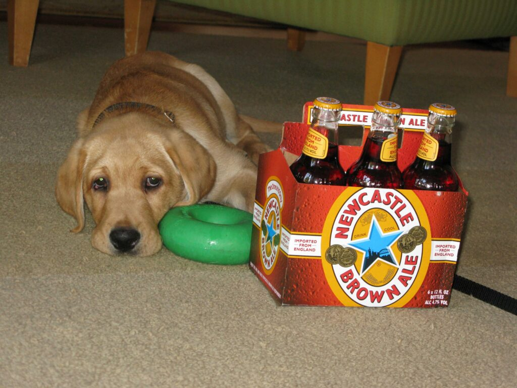 Puppy Newcastle with a 6-pack of Newcastle Brown Ale