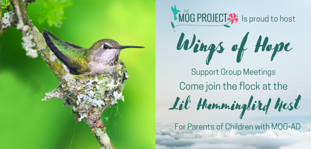 Hummingbird in a Nest for Wings of Hope Lil' Hummingbird Nest Support Group Meetings: come join the flock