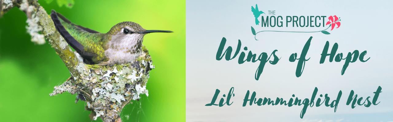 Lil Hummingbird Nest